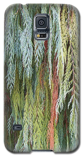 Galaxy S5 Case featuring the photograph Juniper Leaves - Shades Of Green by Ben and Raisa Gertsberg
