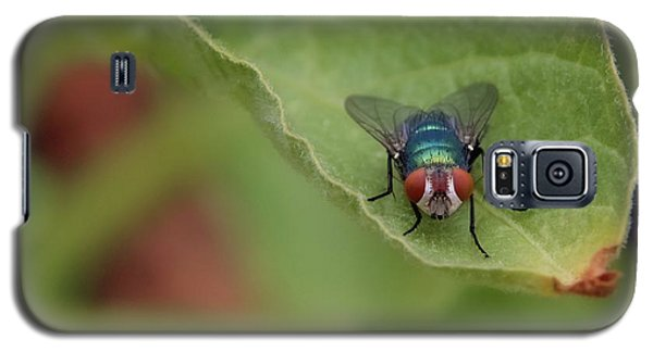 Galaxy S5 Case featuring the photograph Just A Fly by Scott Holmes