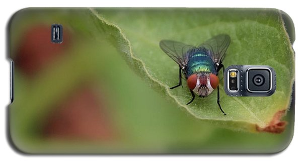 Just A Fly Galaxy S5 Case by Scott Holmes
