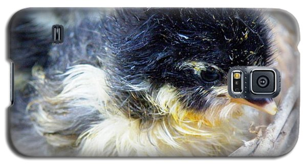 Just Hatched Galaxy S5 Case by Lainie Wrightson
