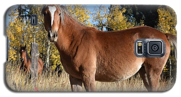 Horse Cr 511 Divide Co Galaxy S5 Case