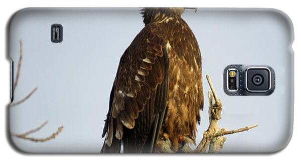 Juvenile Bald Eagle 1 Galaxy S5 Case