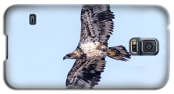 Galaxy S5 Case featuring the photograph Juvenile Bald Eagle 2017 by Ricky L Jones
