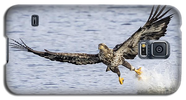 Juvenile Bald Eagle Fishing Galaxy S5 Case