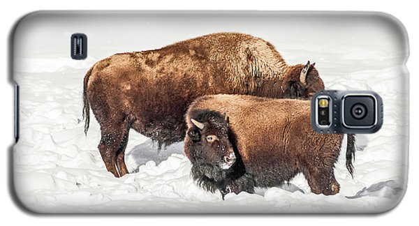 Juvenile Bison With Adult Bison Galaxy S5 Case