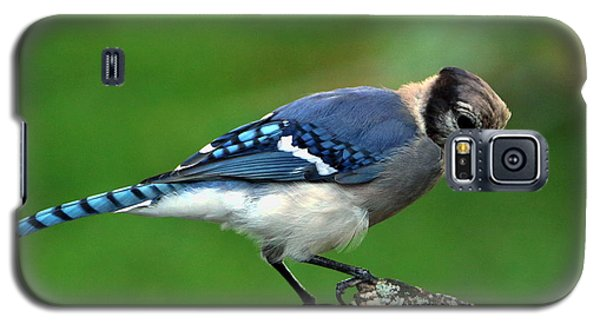 Juvenile Blue Jay  Galaxy S5 Case