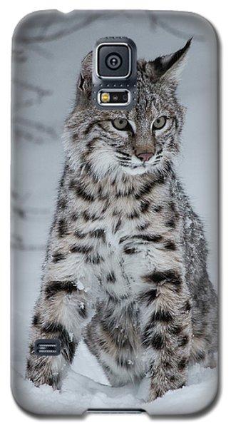 Juvenile Bobcat In The Snow Galaxy S5 Case