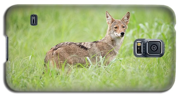 Juvenile Coyote Galaxy S5 Case