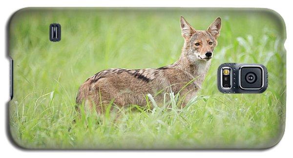 Juvenile Coyote Galaxy S5 Case