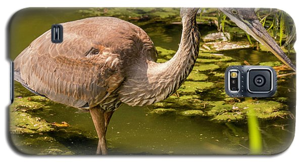 Juvenile Great Blue Heron Galaxy S5 Case