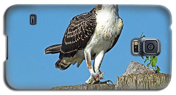 Juvenile Osprey#1 Galaxy S5 Case by Geraldine DeBoer