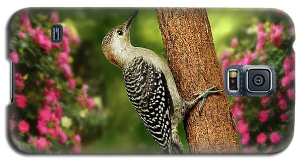 Galaxy S5 Case featuring the photograph Juvenile Red Bellied Woodpecker by Darren Fisher