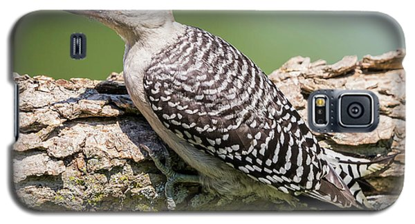 Juvenile Red-bellied Woodpecker Galaxy S5 Case