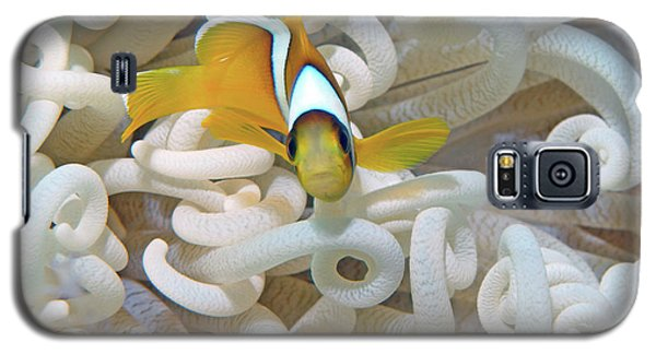 Juvenile Red Sea Clownfish, Eilat, Israel 3 Galaxy S5 Case