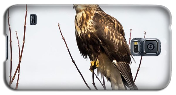Juvenile Rough-legged Hawk  Galaxy S5 Case