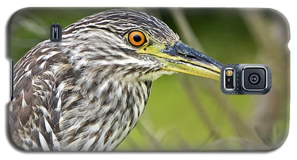 Juvi Black-crowned Night Heron Galaxy S5 Case