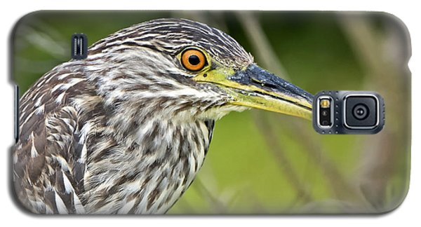 Juvi Black-crowned Night Heron Galaxy S5 Case