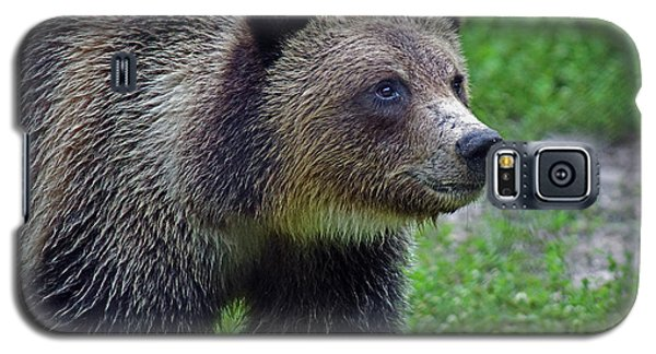 Juvie Grizzly Galaxy S5 Case