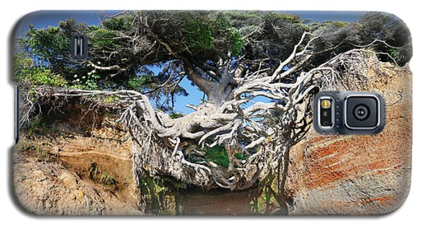Kalaloch Tree Of Life Galaxy S5 Case