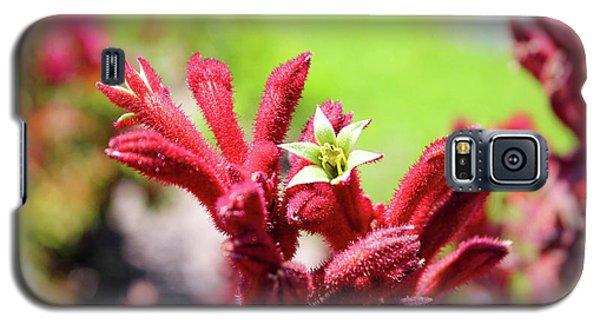 Kangaroo Paws Galaxy S5 Case