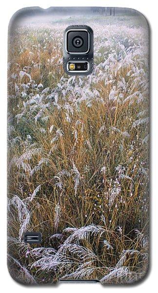 Kans Grass In Mist Galaxy S5 Case