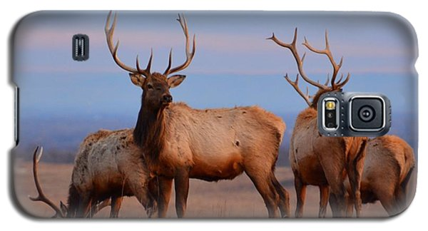 Kansas Elk 2 Galaxy S5 Case