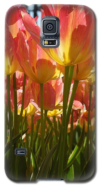 Galaxy S5 Case featuring the photograph Kathy's Tulips IIi by Peg Toliver