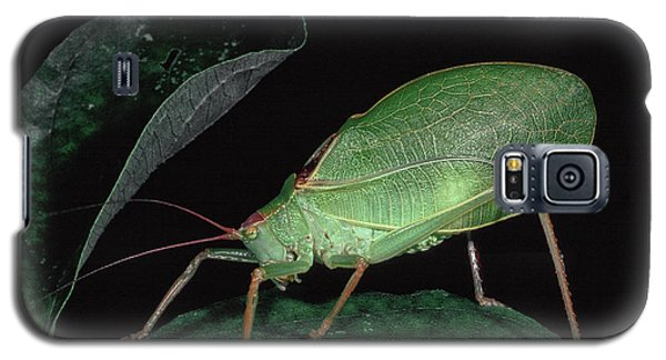 Katydid At Night Galaxy S5 Case