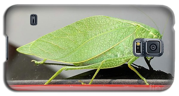 Katydids- Bush Crickets Galaxy S5 Case