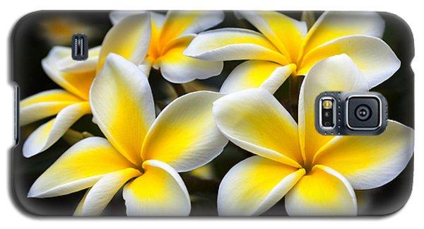 Kauai Plumerias Large Canvas Art, Canvas Print, Large Art, Large Wall Decor, Home Decor, Photograph Galaxy S5 Case by David Millenheft