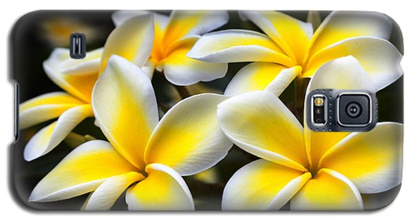 Plumerias Canvas Print,photographic Print,art Print,framed Print,iphone Case,samsung Galaxy Case, Galaxy S5 Case