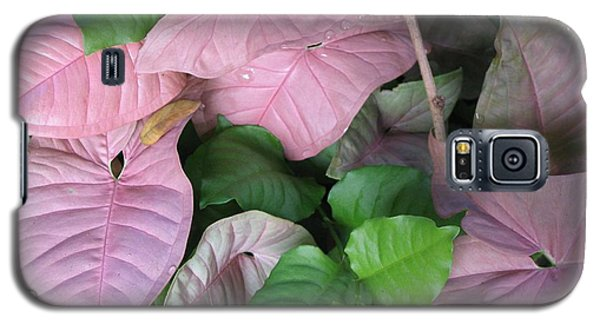 Galaxy S5 Case featuring the photograph Kauai  Pinks by Carol Sweetwood