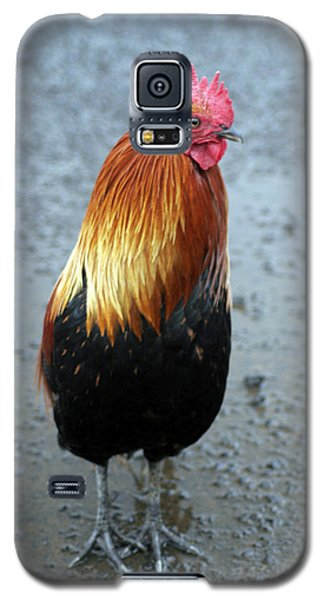 Kaui Rooster Galaxy S5 Case