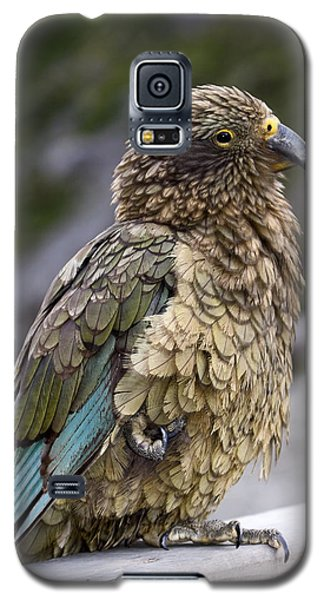 Galaxy S5 Case featuring the photograph Kea Bird by Sally Weigand