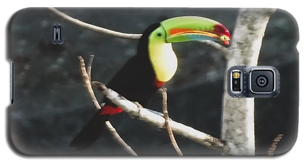 Keel-billed Toucan Galaxy S5 Case