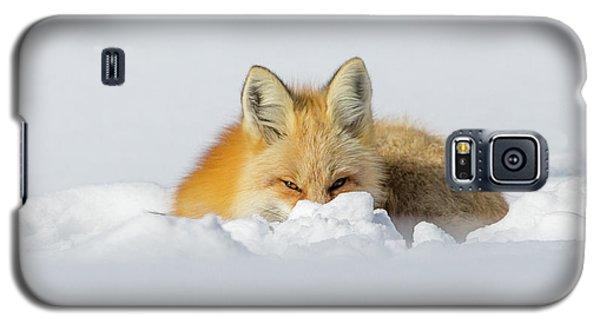 Snow Hide Galaxy S5 Case