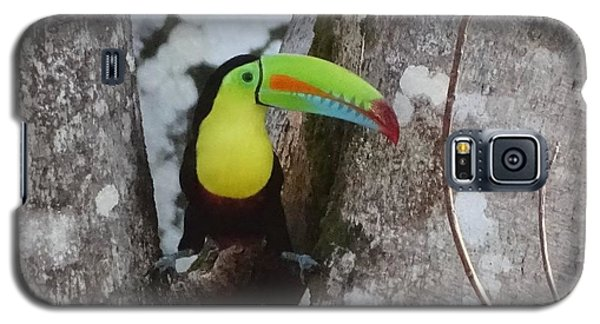 Keel-billed Toucan #2 Galaxy S5 Case