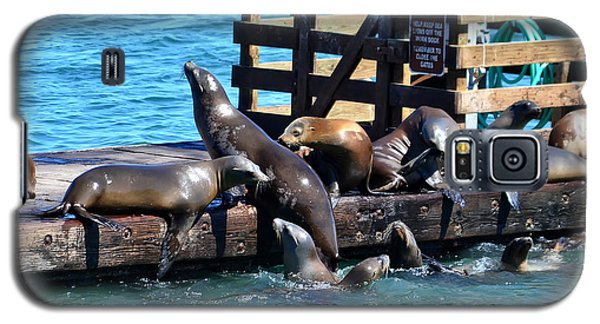 Keep Off The Dock - Sea Lions Can't Read Galaxy S5 Case