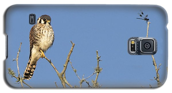 Kestrel And Lunch Galaxy S5 Case