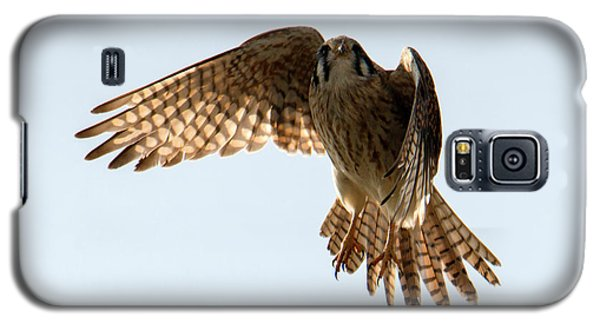 Galaxy S5 Case featuring the photograph Kestrel Hover by Mike Dawson