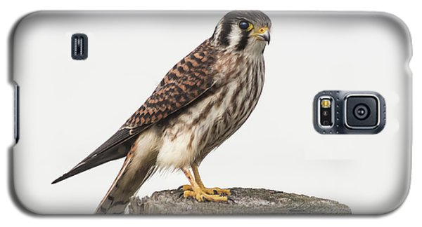 Galaxy S5 Case featuring the photograph Kestrel Portrait by Robert Frederick