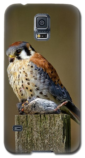 Kestrel With Prey Galaxy S5 Case