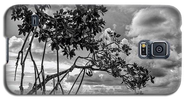 Key Largo Mangroves Galaxy S5 Case