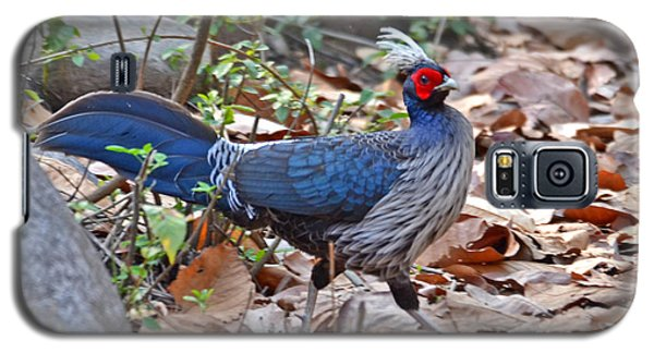Khalij Pheasant In The Wild Galaxy S5 Case by Pravine Chester