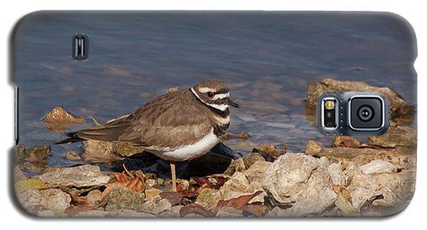 Killdeer Galaxy S5 Case - Kildeer On The Rocks by Robert Frederick