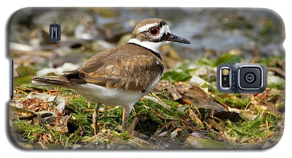 Killdeer At The Coast Galaxy S5 Case