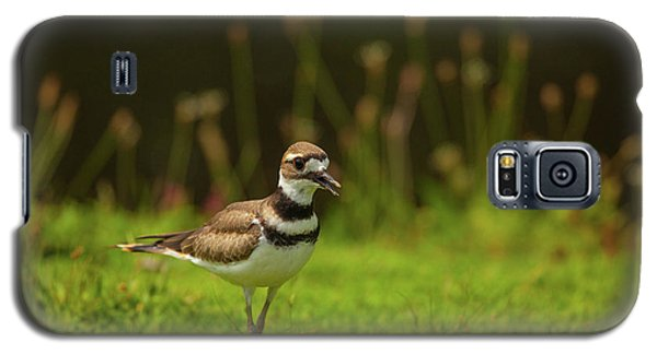 Killdeer Galaxy S5 Case by Karol Livote