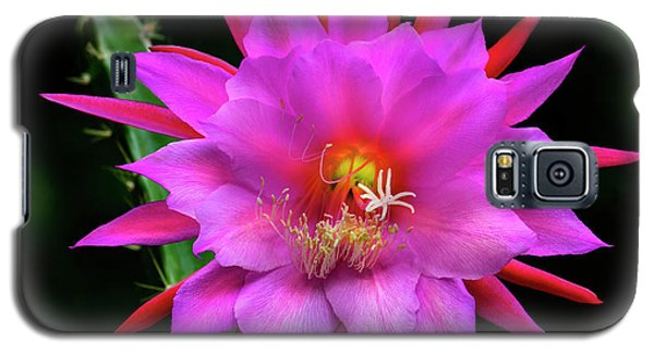 Kimnach's Pink Orchid Cactus Galaxy S5 Case