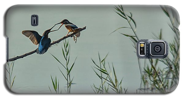 King Fishers  Galaxy S5 Case