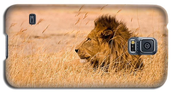 Lion Galaxy S5 Case - King Of The Pride by Adam Romanowicz